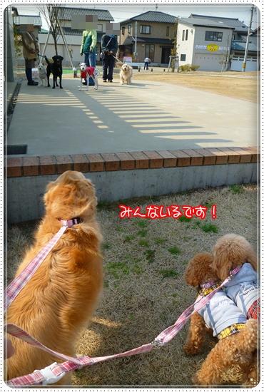 2011,3,29お散歩2