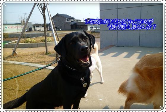 2011,3,29お散歩5