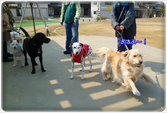 2011,3,29お散歩3