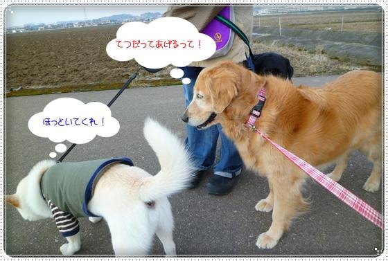 2011,3,30お散歩6