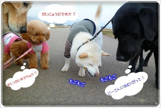 2011,3,30お散歩3