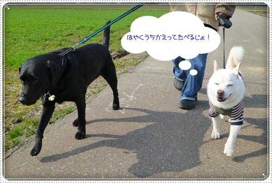 2011,3,30お散歩11