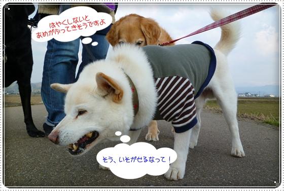 2011,3,30お散歩8