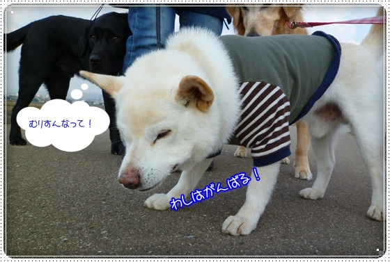 2011,3,30お散歩7