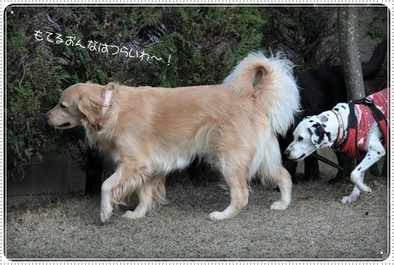 2011,4,2お庭遊び15