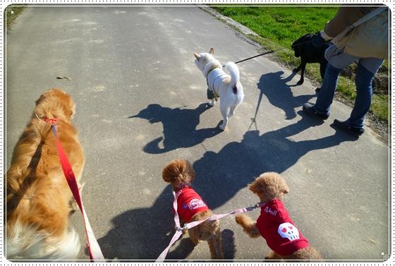 2011,4,4お散歩4