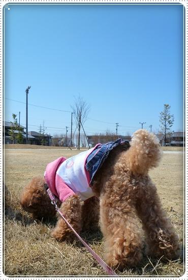 2011,4,6お散歩6