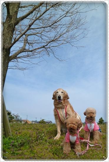 2011,4,7お散歩1
