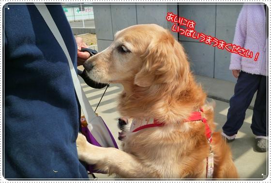 2011,4,7お散歩7