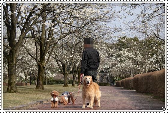 2011,4,10お散歩5