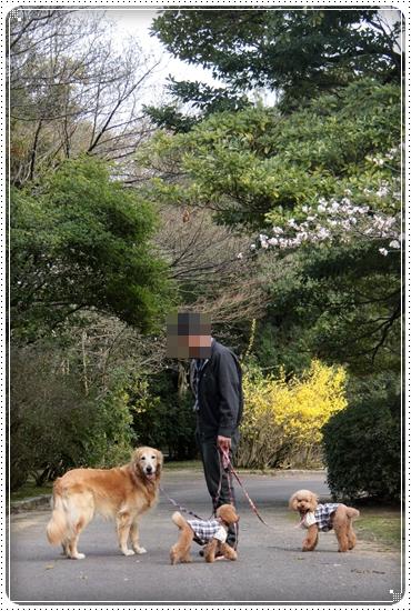 2011,4,10お散歩3