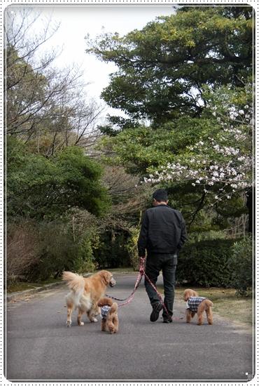 2011,4,10お散歩2