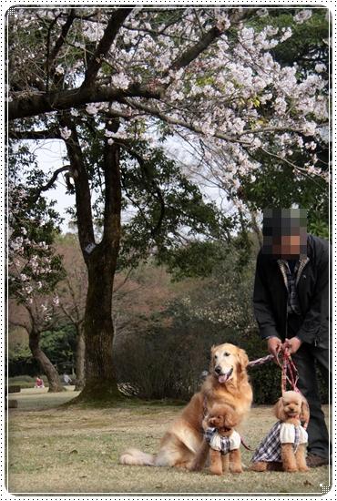 2011,4,10お散歩8