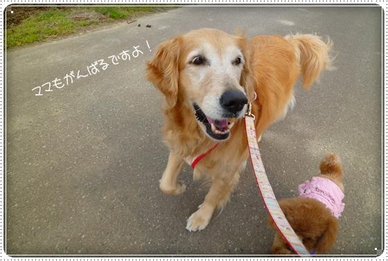 2011,4,11お散歩2