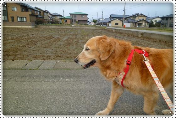 2011,4,11お散歩1
