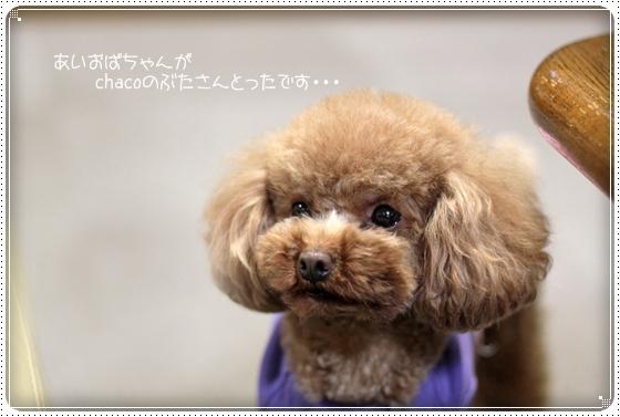 2011,4,11お散歩9