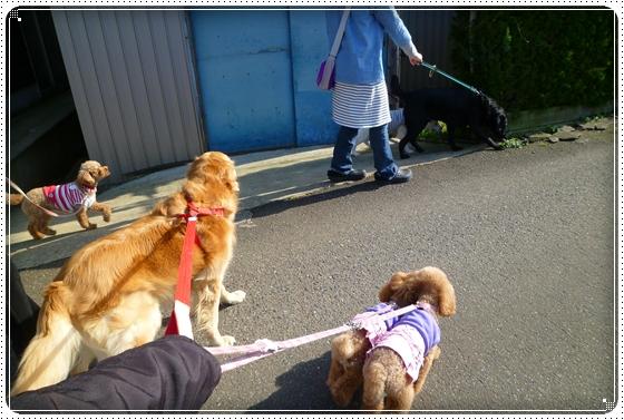 2011,4,12お散歩6
