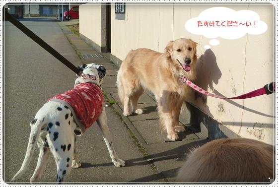 2011,4,12お散歩12