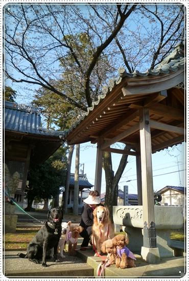 2011,4,12お散歩10