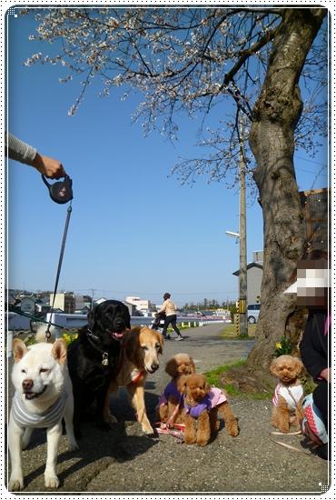 2011,4,12お散歩9
