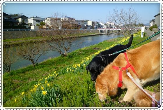 2011,4,12お散歩7