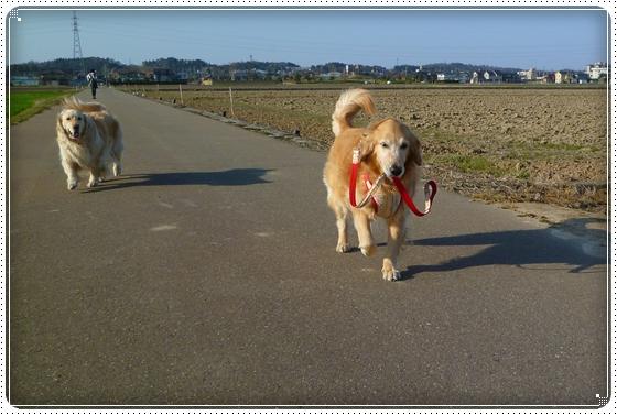 2011,4,13お散歩9