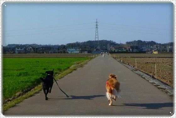 2011,4,13お散歩8