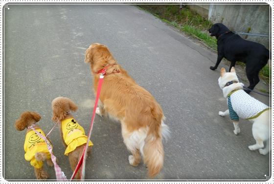 2011,4,16お散歩2