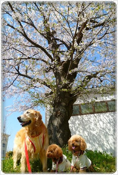 2011,4,19お散歩3