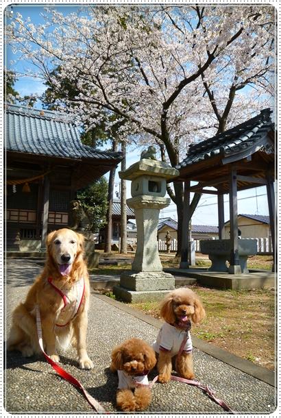 2011,4,19お散歩2