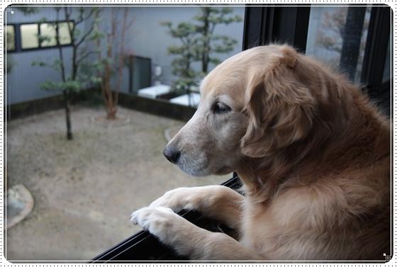 2011,4,19お散歩4