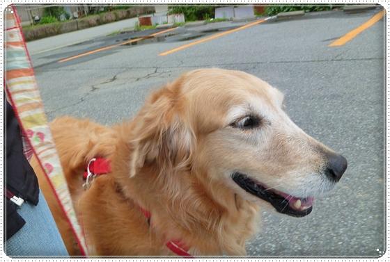 2011,4,28お散歩2