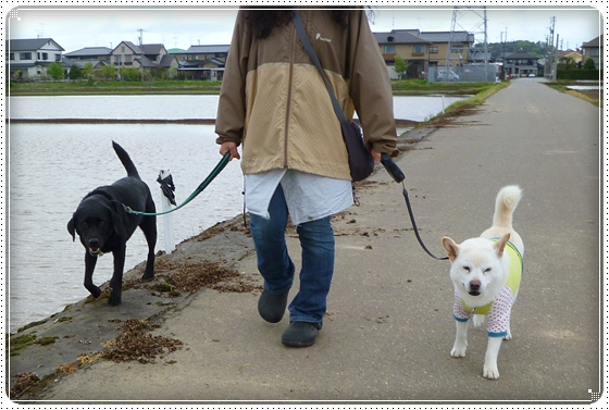 2011,4,28お散歩7