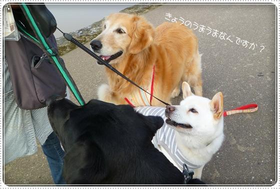 2011,5,10お散歩6