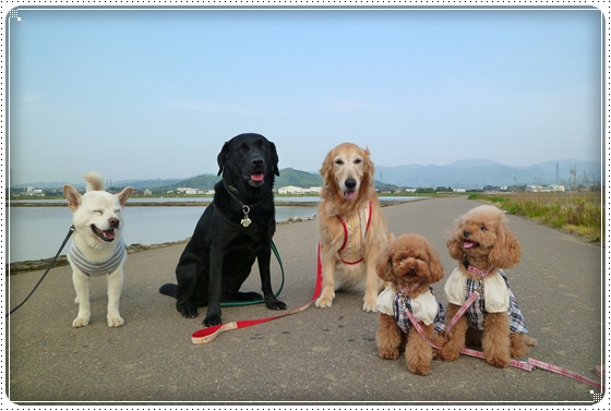 2011,5,10お散歩5