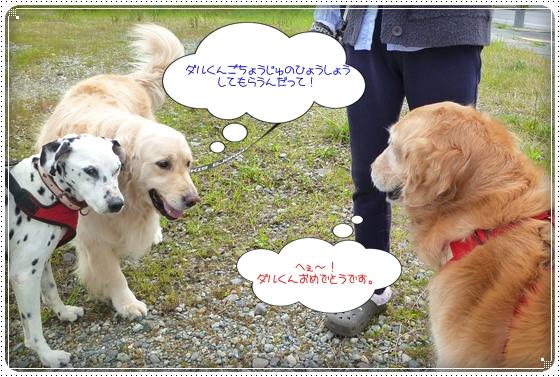 2011,5,10お散歩2