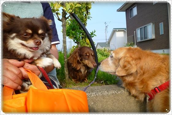 2011,5,10お散歩9