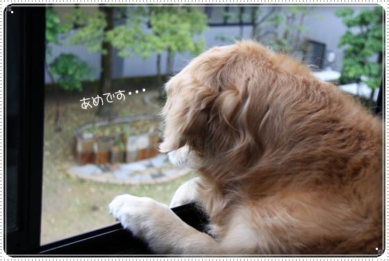 2011,5,11雨1