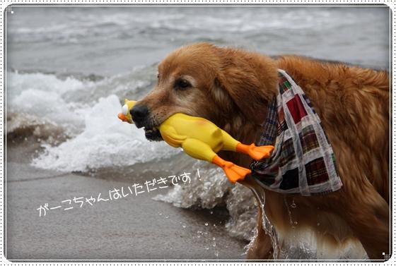 2011,5,11雨8