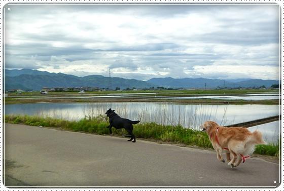 2011,5,12お散歩4