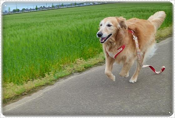2011,5,12お散歩3