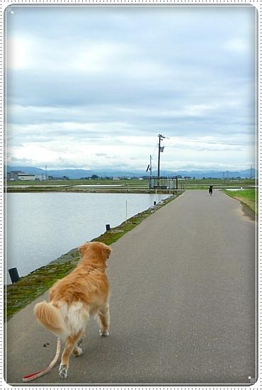2011,5,12お散歩2