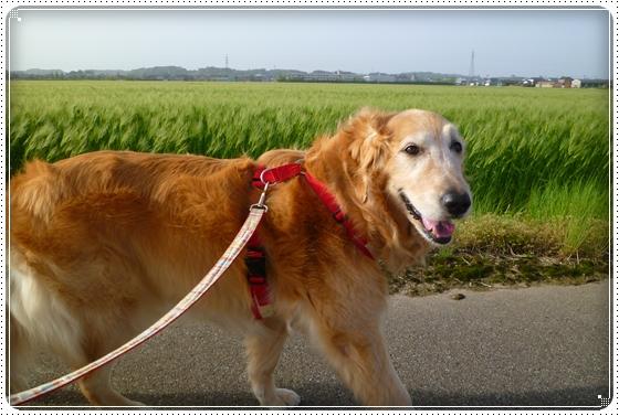 2011,5,13お散歩3