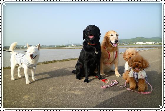 2011,5,13お散歩2