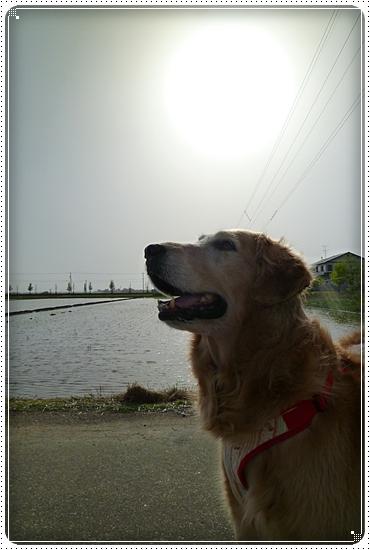 2011,5,13お散歩1