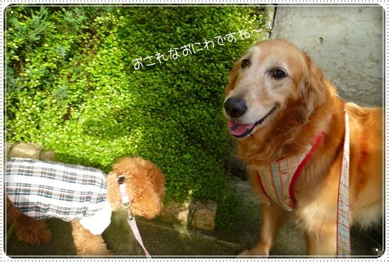 2011,5,13お散歩7