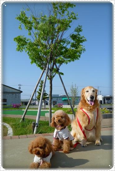 2011,5,14お散歩3