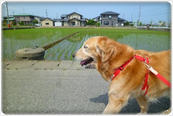 2011,5,21お散歩1