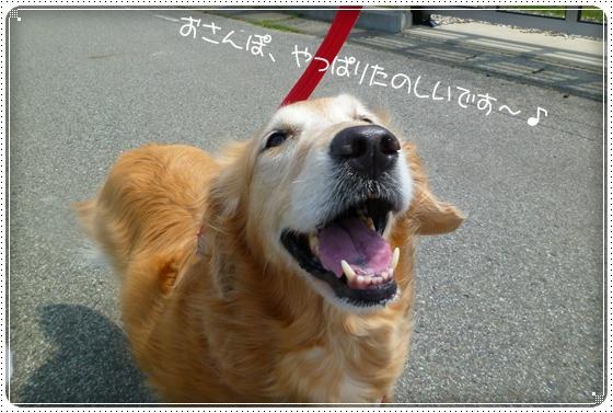 2011,5,21お散歩5