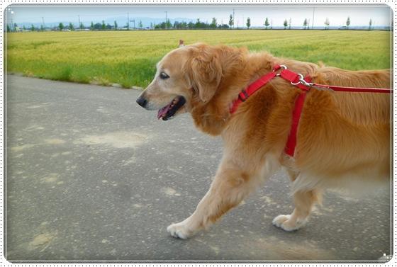 2011,5,21お散歩11